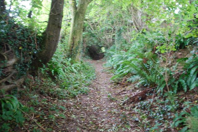 Sunken Lane