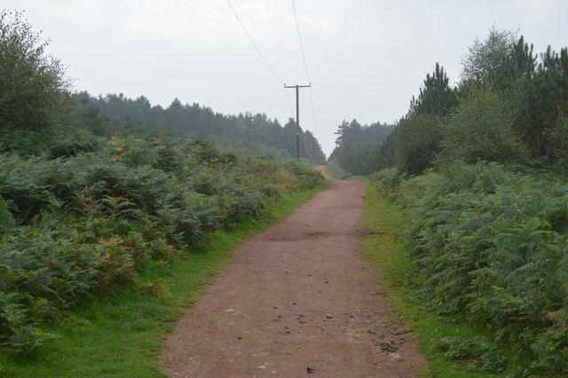 Footpath into Dark Slade