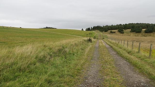 Track on Dunbog Hill