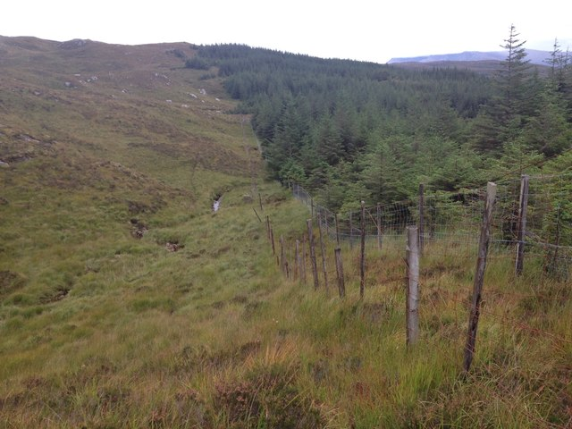 Forest boundary in Glenhurich