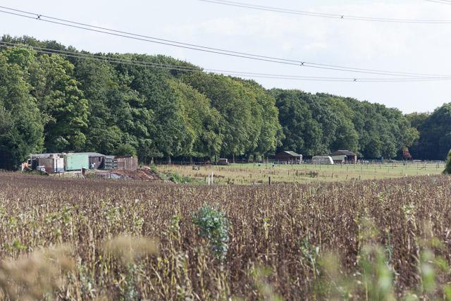 Horsey fields beside Broadway Lane