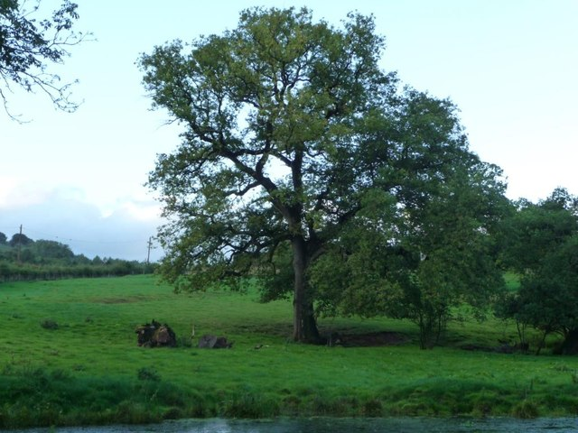Canalside tree at dusk, south of Ty-poeth Farm