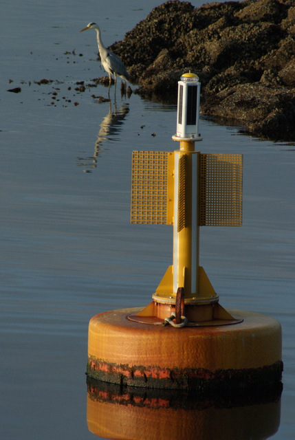 Navigation buoy at Garvel Point