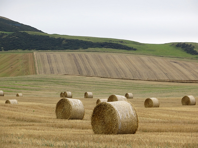Round bales by Collairnie