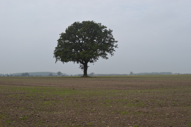 Arable land near Littleton Colliery