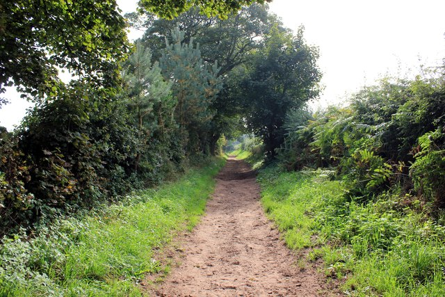 The Sandstone Trail near Willington Wood