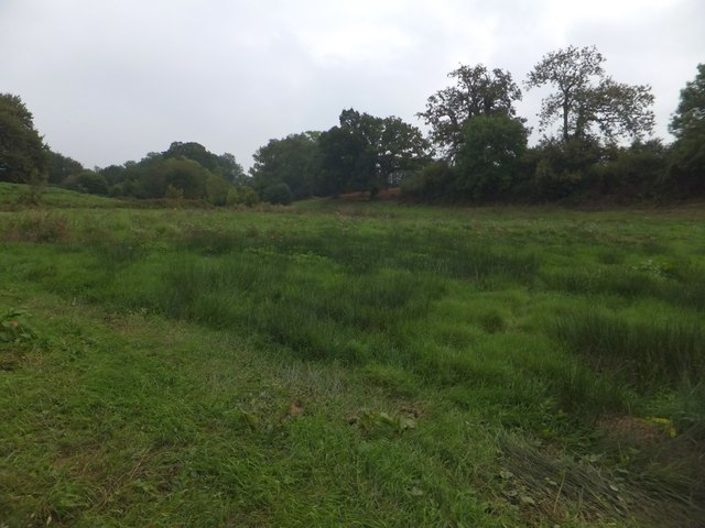 A marshy valley between Upton Pyne and Brampford Speke