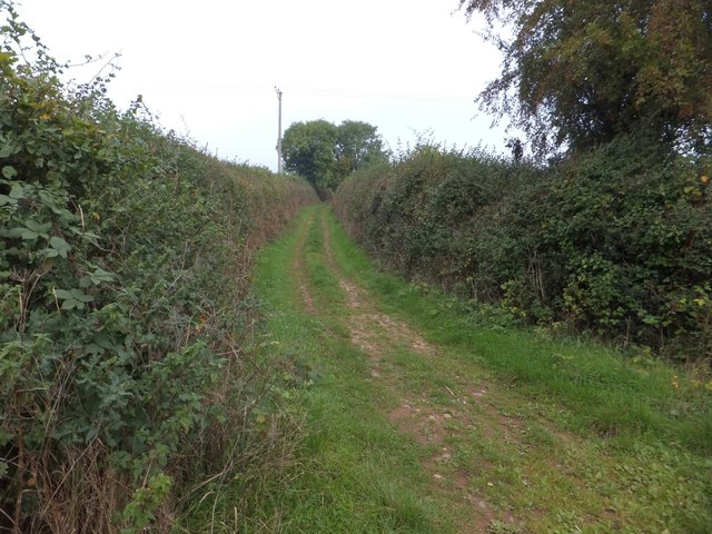 Farm track near Brampford Speke