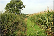 SJ5365 : The Sandstone Trail at Willington by Jeff Buck