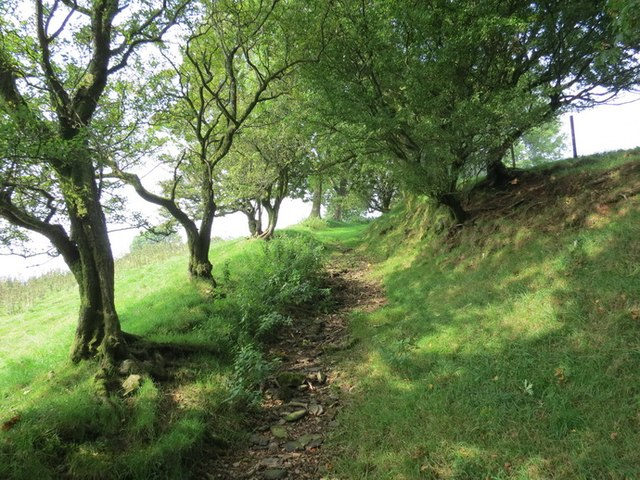 Llwybr Tir Paun Footpath