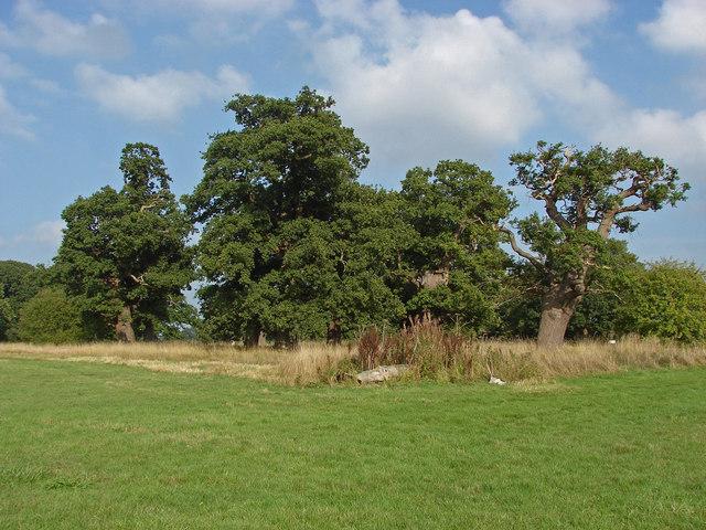 Old oaks, Windsor Great park