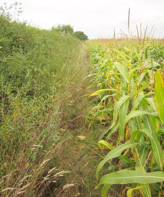 Path to Pevlings Farm