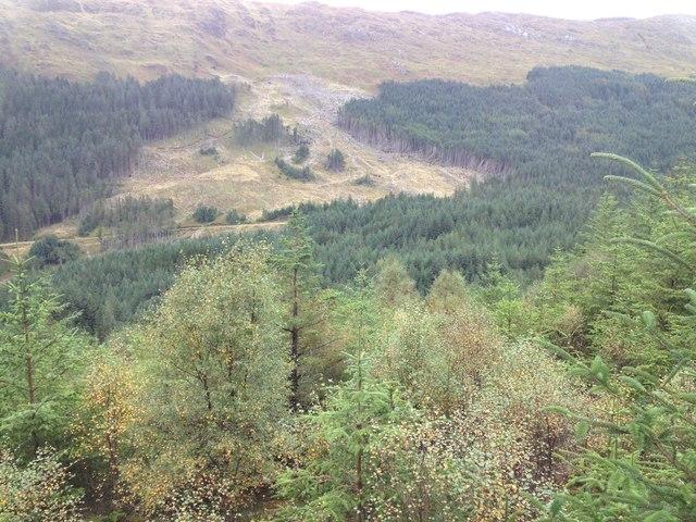 Glenhurich Forest