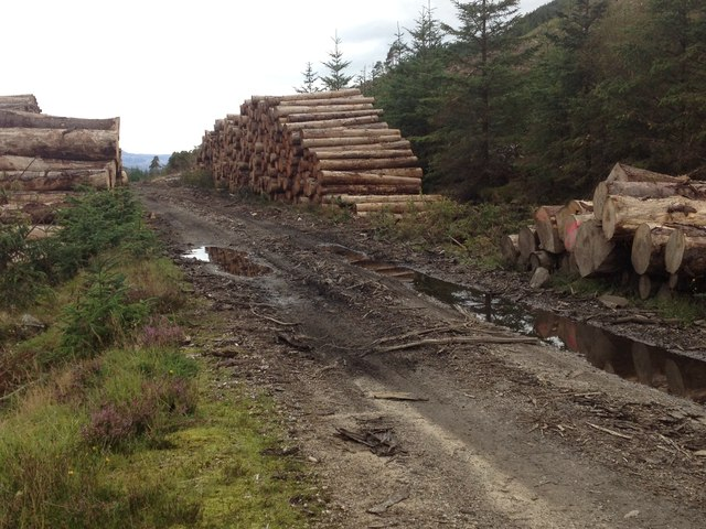 Log piles beside the forestry road in Glenhurich Forest