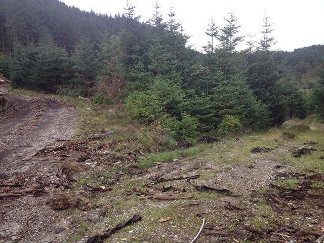 Forestry road junction near Polloch