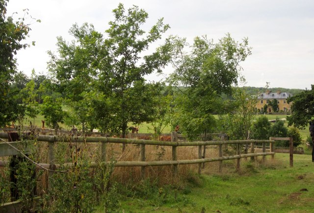 Young wood near Harbour Farm