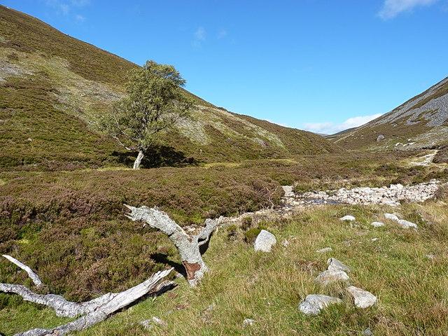 In the valley of the Allt Tarsuinn