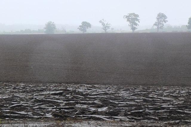 Damp fieldscape