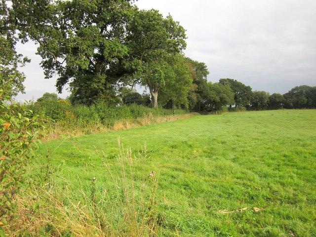 Field by Monarch's Way