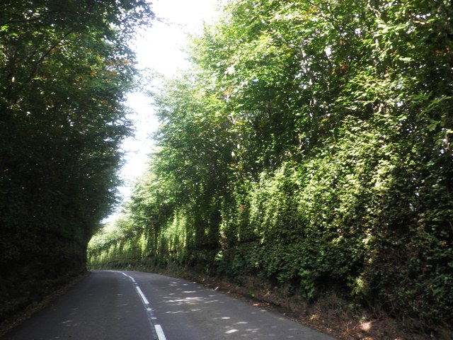 High hedges on the B3224