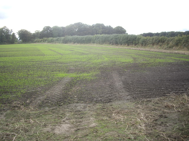 Hedgerow around an arable field
