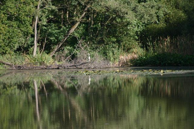 A heron at  Brewhouse Pond