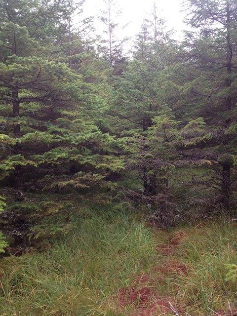 Forestry in Glen Hurich
