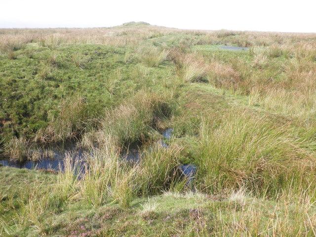 Bogland near Five Barrows Hill