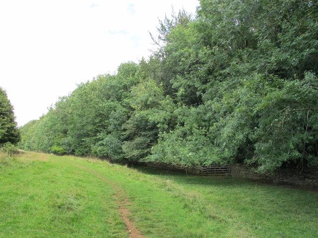 Ash trees, Fiddlers Knap, Bredon Hill