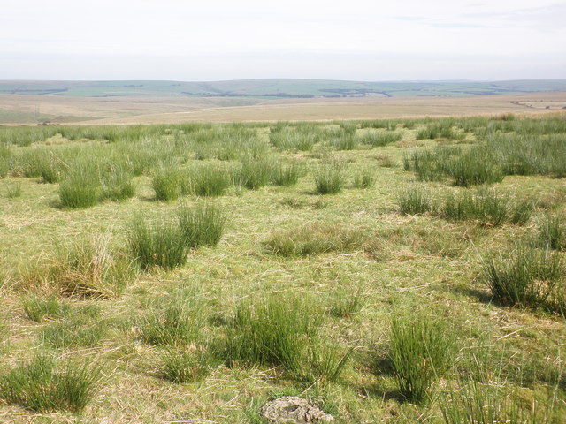 Boggy grassland on the slopes of Five Barrows Hill