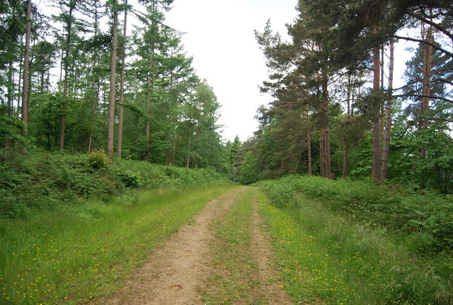 Forest track, Leggett's Wood