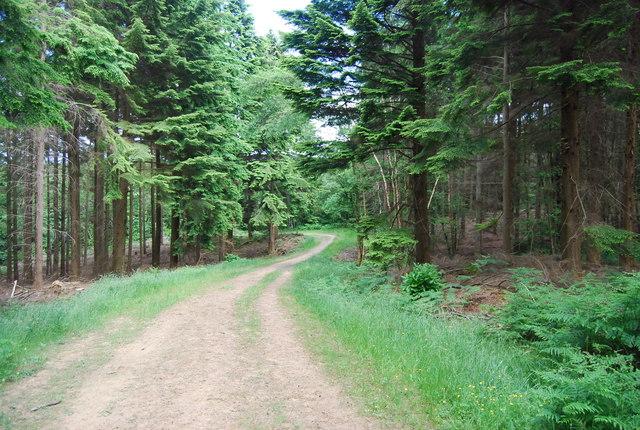 Forest track, Lower Leggett's Wood