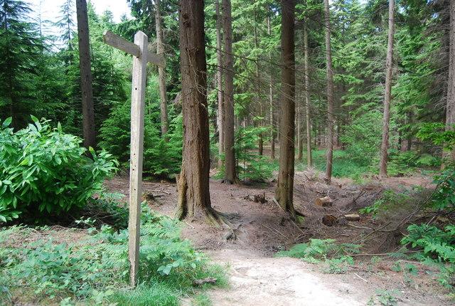 Footpath in Lower Leggett's Wood