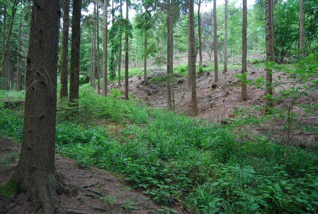 Dry stream, Lower Leggett's Wood