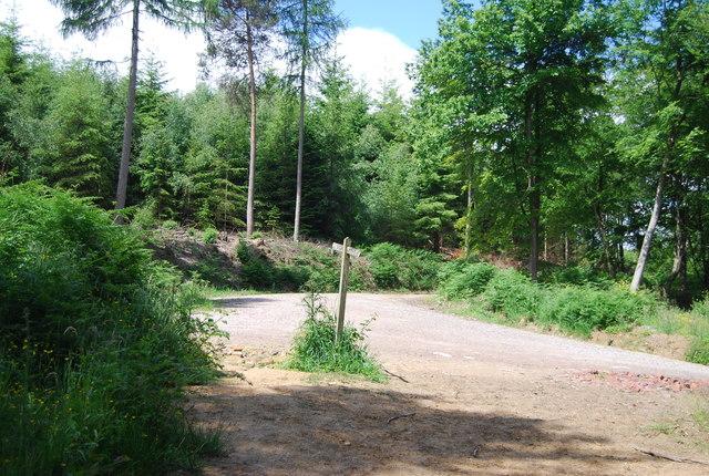 Tracks in Lower Leggett's Wood