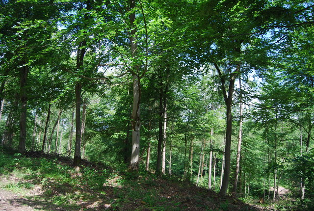 Lower Leggett's Wood