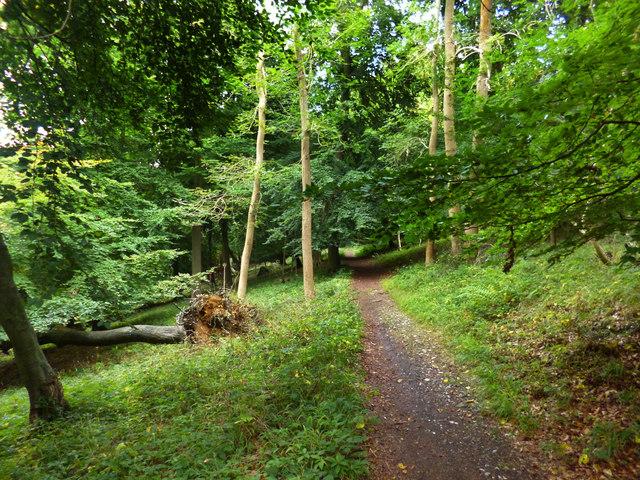 Contour Path