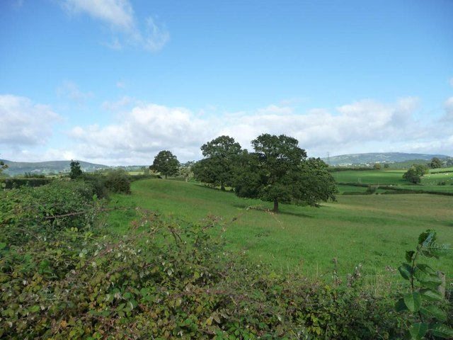 Field with trees, south-west of Granary Farm