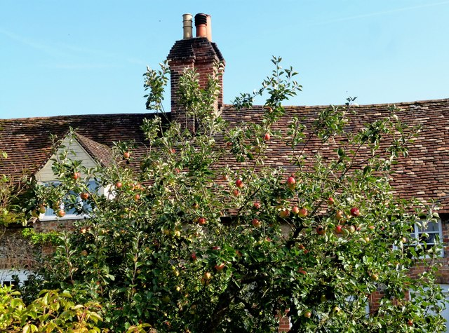 Apples & Chimneys, Mapledurham