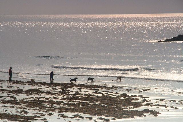 Doggie paradise, Borth