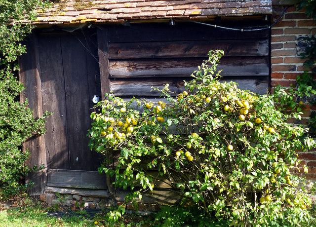 Door & Quinces, Mapledurham