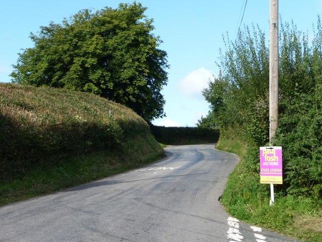 Roadside tree and trimmed hedge, Tre-herbert Road