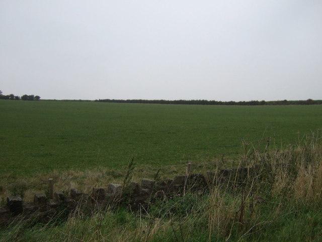Farmland, Billingley Green