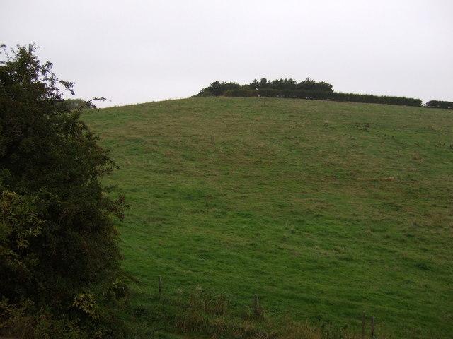 Grazing, Cudworth Common