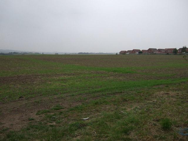 Farmland, Cudworth Common