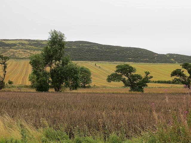 Bean crop, Parbroath