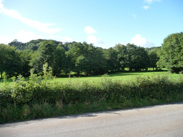 Trees alongside Sor Brook