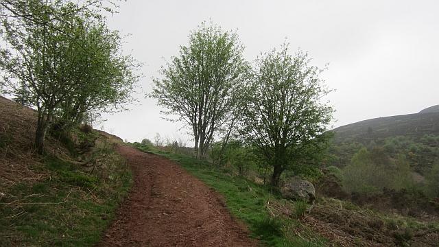 Path, Eildon Hills