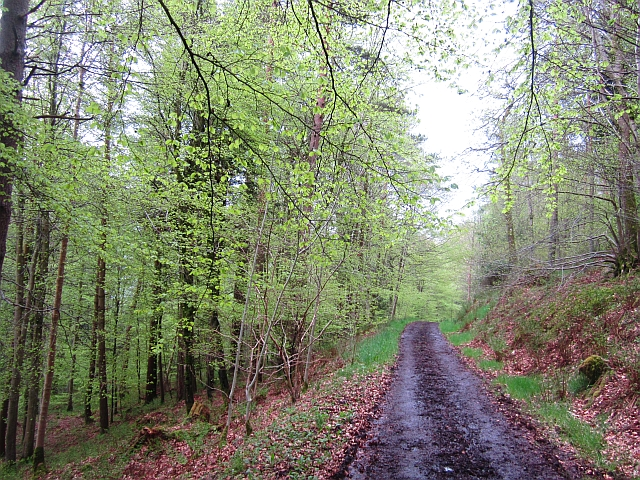 Broad Wood