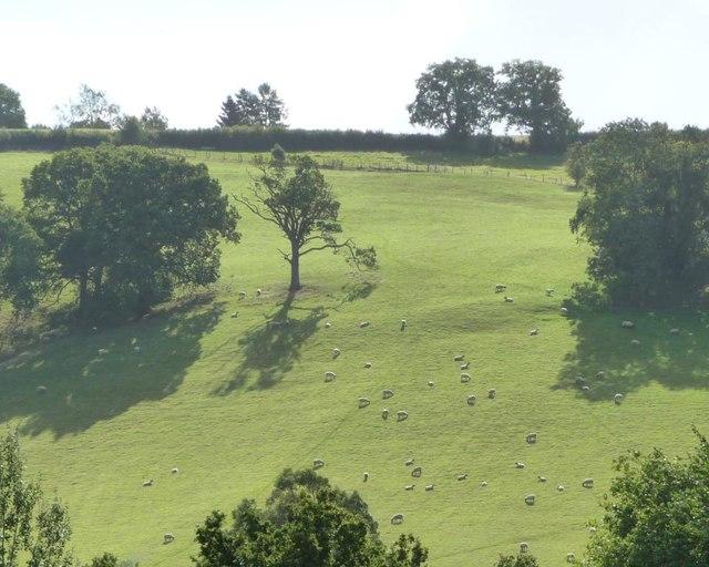 Hillside sheep pasture, north of Cwm-y-wiwer Farm
